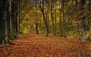 Autumn Colour at Laughton Woods