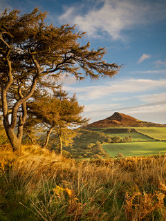 Roseberry Topping Larches