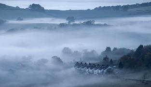 Gribdale Terrace in the Mist