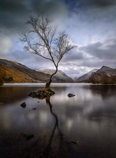 Lone Tree Llynn Padarn