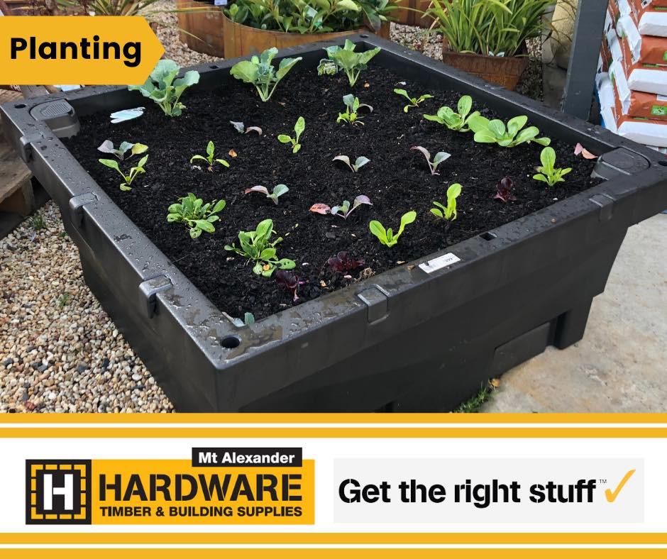 Biofilta Foodcube - Crop 1 - Seedlings on Planting