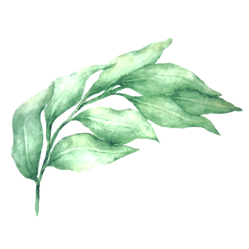 Leaves 1_edited_edited.png