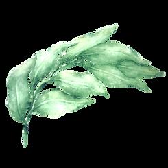 Leaves 1_edited_edited_edited.png