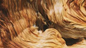 Antibakterielle Wirkung von Holz
