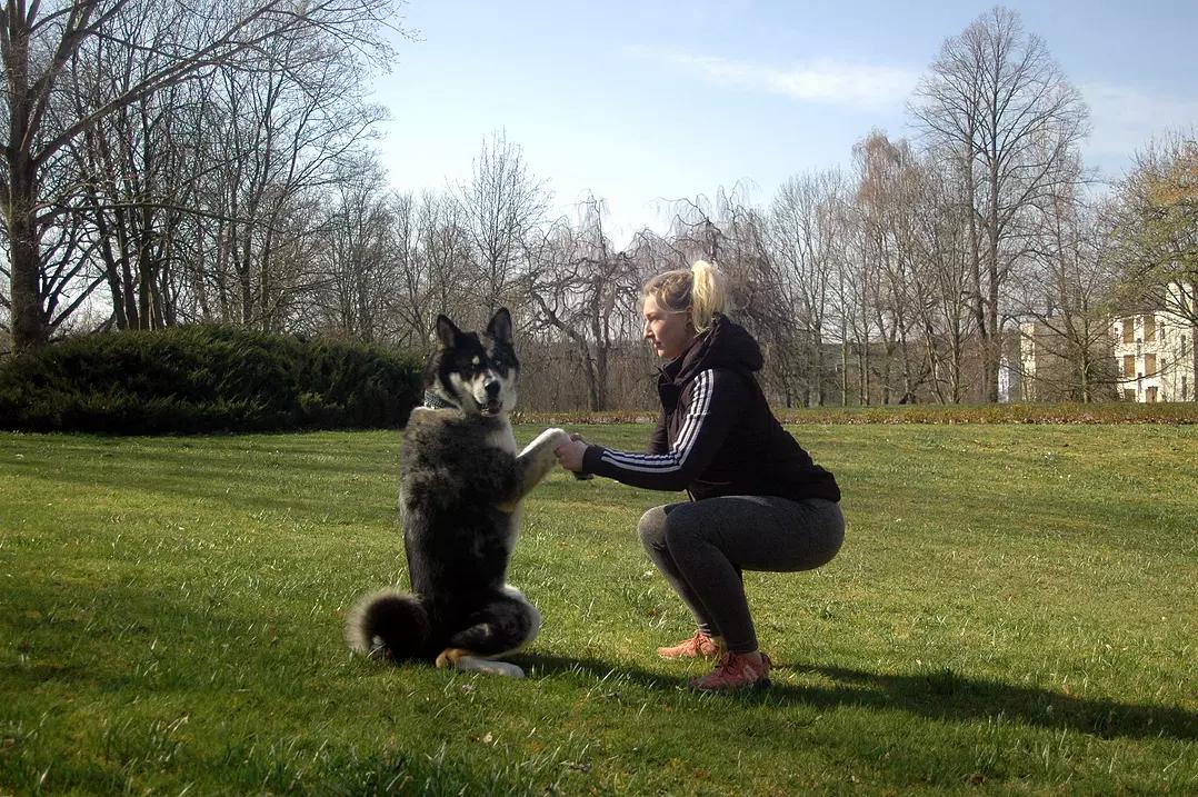 Kraftkreis mit Hund