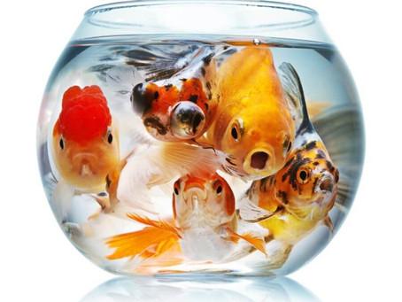 Too many fish????