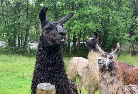 The boys after a heavy shower!