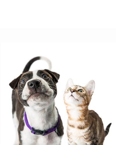 Dog Cat 2.jpg