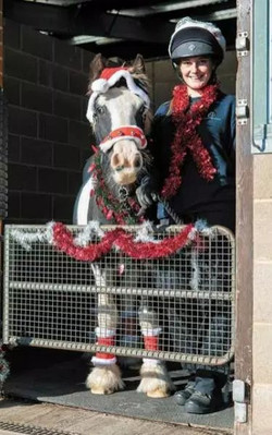 """Equine """"street kid"""" finds a place to call home at Christmas"""