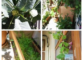 Сад на балконе. ОБНОВЛЕНО