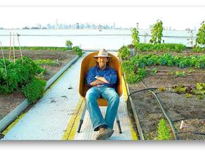 Сад / Ферма на крыше