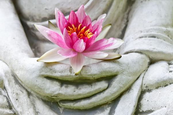 Buddha hands holding flower.jpg