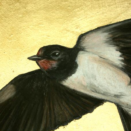 Swallow detail