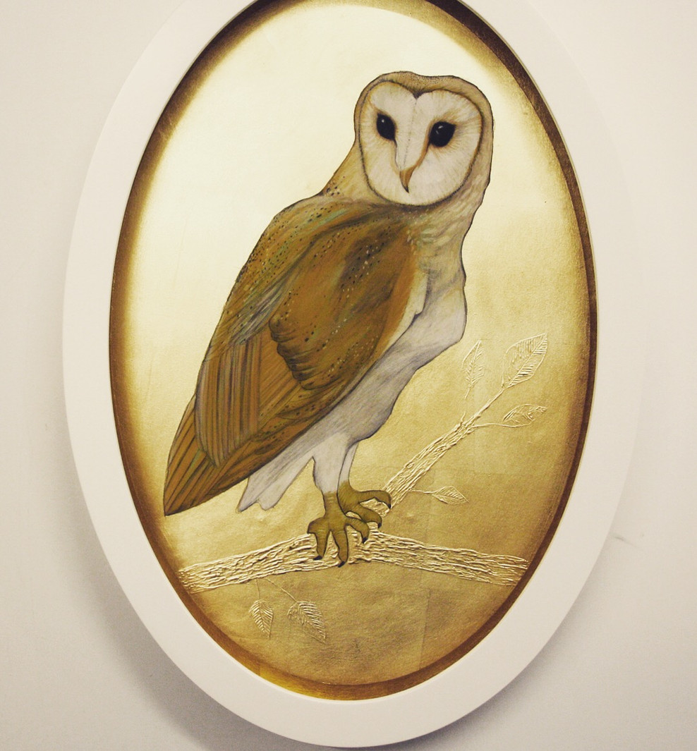 Oval Barn Owl
