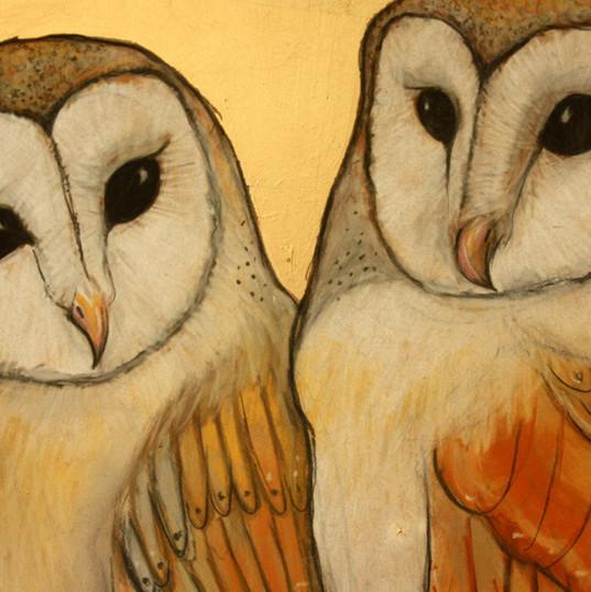 Young Barn Owls