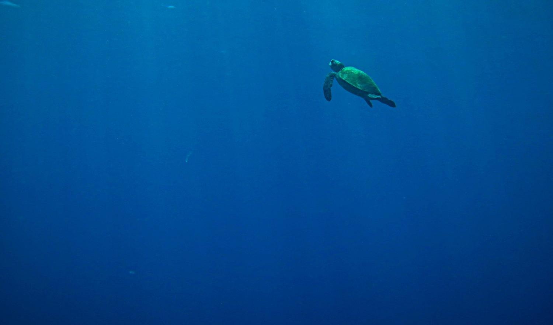 turtle_edited_edited
