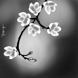 cherry blossom bnw.jpg