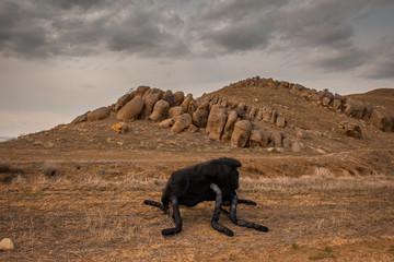 Houbara (part of series) by Delal Seker Bulut -  Ankara, Turkey