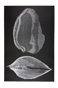 Mussels By Elisabeth Pellathy -  Mountain Brook, USA