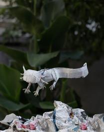 Axolotl by Jose Herrera -  Ciudad de México, México