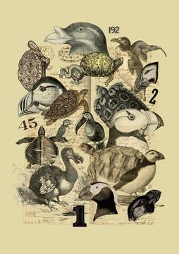 Species 2020 by Pawel Pacholec - Gdansk, Poland