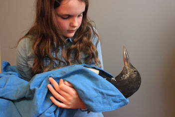 Erin and The Great Northern Diver by Shelley Castle - Kingsbridge, UK
