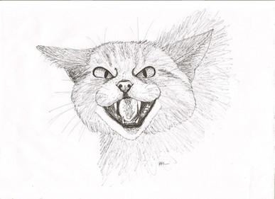Scottish Wildcat by Aliya Hashmi - Scotland