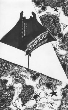 Manta ray at Keahou bay by Yula (Robin) Kim - London, UK