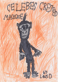 Linus' Celebes Crested Macaque by Linus Duff (9 years old) - Edinburgh, Scotland