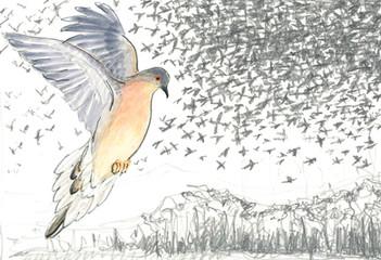 Passenger Pigeon by Oona Stern - Brooklyn, USA