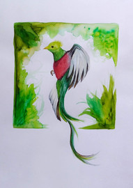 Quetzal by Aileen Samantha Hernandez - Mexico