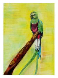 Quetzal by Diana Brenda Resendiz - Zinacantepec, México