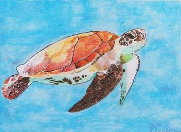 Sea Turtle by Michael Putorti - Pennsylvania, United States of America