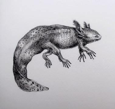 Axolotl by Lora Elezović - Zagreb, Croatia
