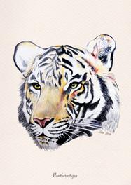 Panthera Tigris by Leonie Leonhardt - Spain
