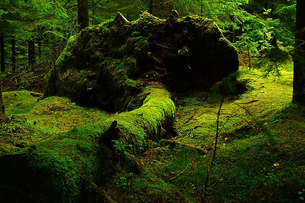 forest-483207_1920.jpg