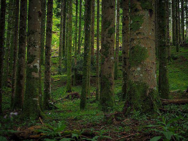 teffit-immersioni-in-foresta-corso-terapie-forestali-bagno-di-foresta