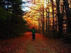 Foliage Autunnale.JPG