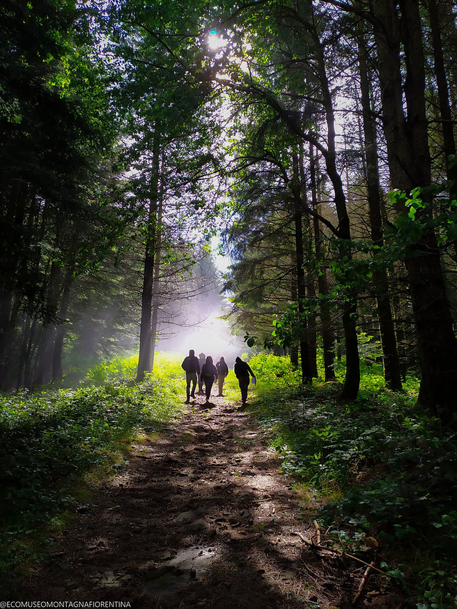 foresta-2.jpg
