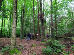 Bagno di Foresta TeFFIt 2