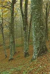 Le foreste Italiane non sono solo legna da ardere ...