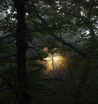 NEBBIE FORESTE CON SOLE2-2.jpg