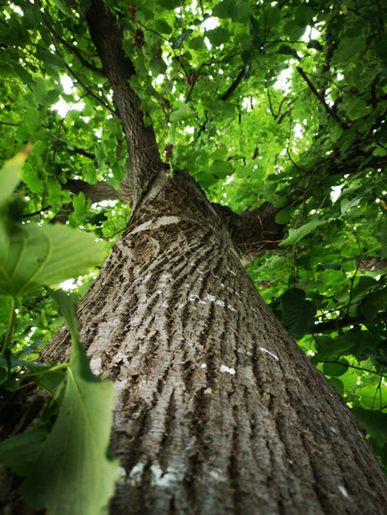 tree-4413080.jpg