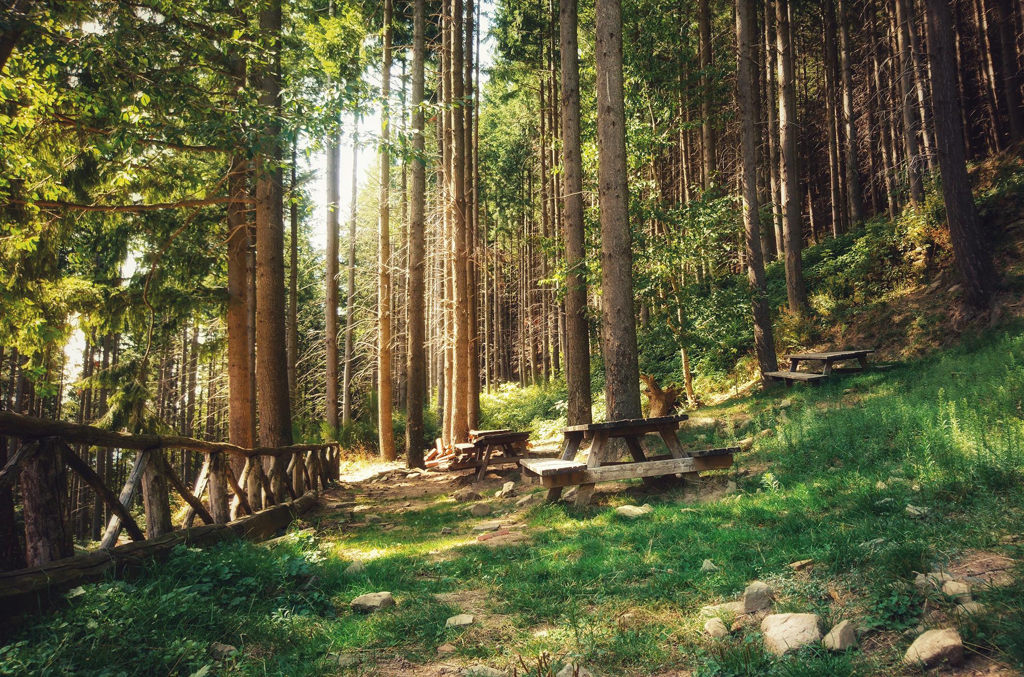 Foresta dei Giganti