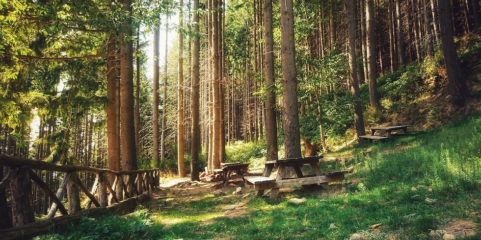 ANPIL Foresta S. Antonio