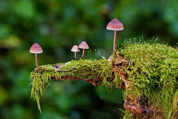 mushrooms-2798150_1920.jpg