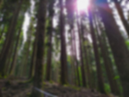 Foresta vallombrosa.jpg