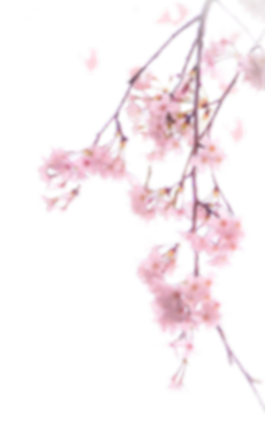 cherry_blossoms_png__4_by_augt30_dcfl7qx