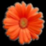 orange-flower-png-5.png
