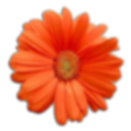 orange-flower-png-5.png